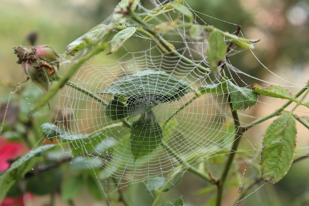 telarañas en el jardin